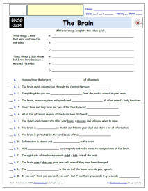 Enchanting Bill Nye the Science Guy Brain Worksheet Also Bill Nye ...